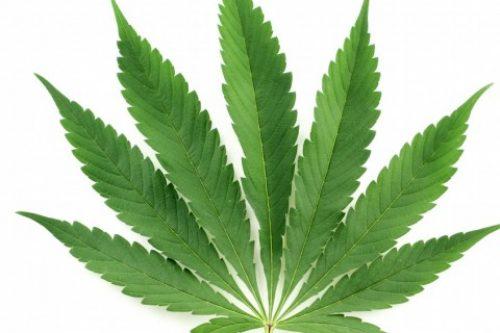 Obertura a Barcelona d'un museu dedicat al cànnabis